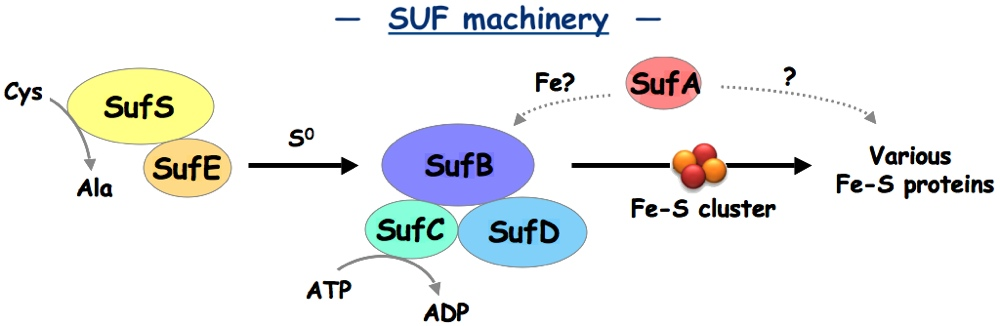 SUF machinery